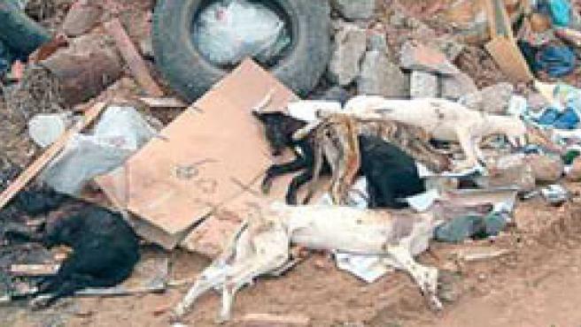 Cinco galgos asesinados y tirados en una escombrera en Zamora