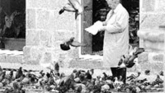 Un hombre da de comer, sin miedo, a las palomas en la praza de la Princesa (Vigo).