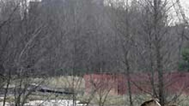 Caballos salvajes en torno a la central nuclear de Chernóbil (EFE)