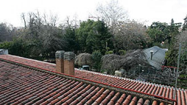 Los jardines del Botánico, desde el tejado del Prado (Jorge París).