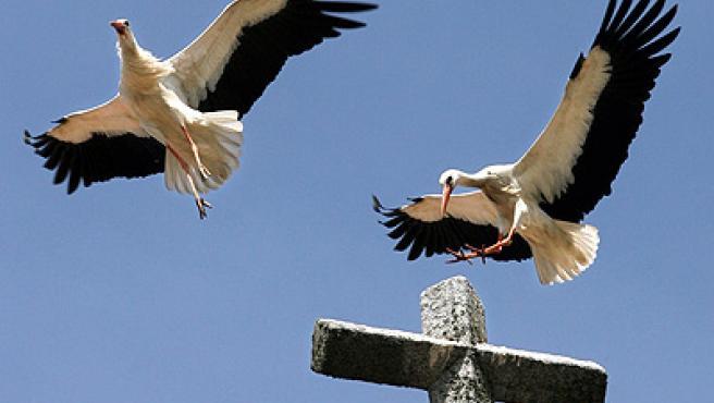 La pareja, en el aire (Juan Carlos Hidalgo / Efe).