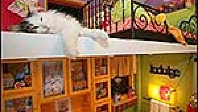 10 gatos concursan en 'Meow Mix House'