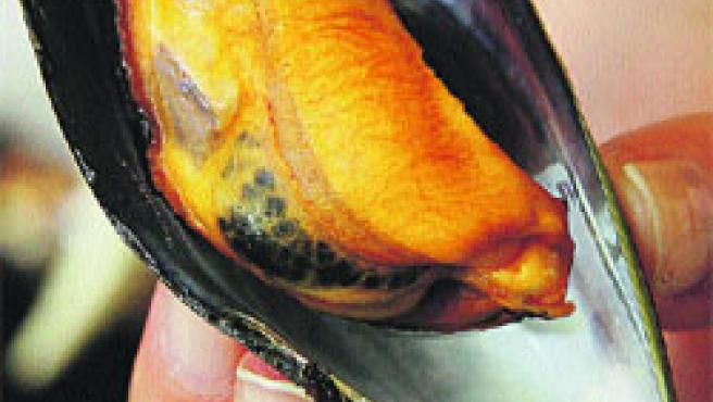 Plato tradicional del verano gallego, el mejillón tomará Castrelos.