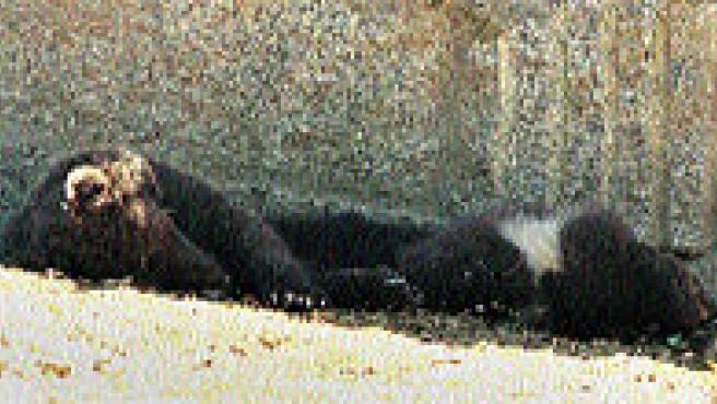 Pelayo y Brais descansan a la sombra para combatir el calor. (M. Vila)