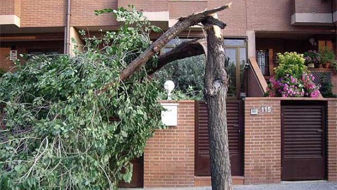 El vendaval derribó árboles y vallas (Roberto Acedo)