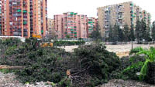 Los árboles de la Hípica han sido talados esta semana para construir pisos (Torres).
