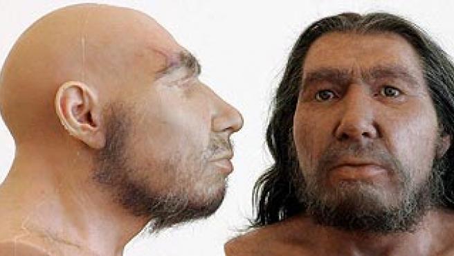 Reconstrucciones de cráneos del Neandertal. (ARCHIVO)