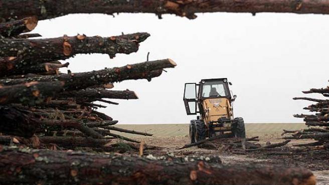 Ecologistas han denunciado la tala de más de 10.000 pinos en Villanueva de Gómez. (Jonathan Martín Domínguez / Efe)