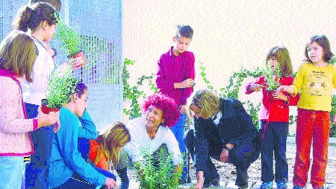 Cerca de 40 colegios que tienen un trozo de tierra, destinado a un huerto. (Sara Riera / Acn)