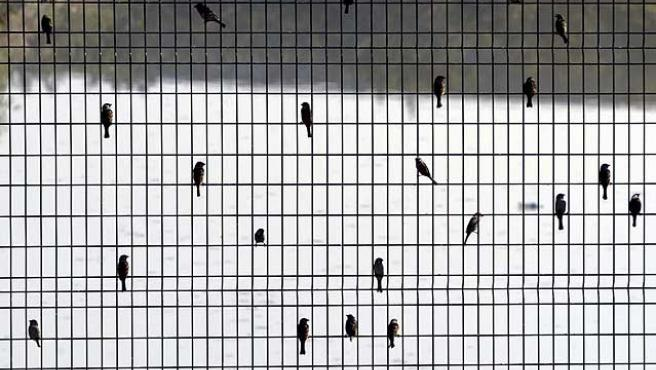 Descanso. Varios pájaros en una valla del aeropuerto de Shanghai. El Gobierno chino ha negado que una nueva mutación del virus de la gripe aviar H5N1 haya surgido en la costa china, según han declarado varios científicos.