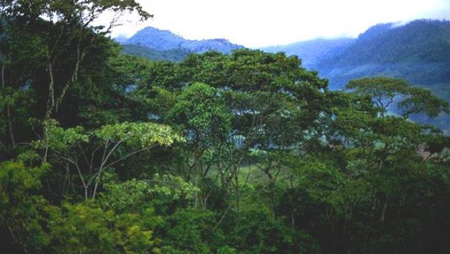 Imagen de una selva tropical (Archivo).