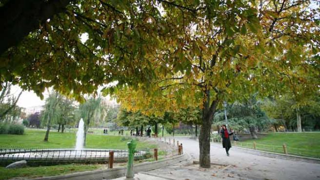 Este año, las hojas se resisten a caer.(Sergio González).
