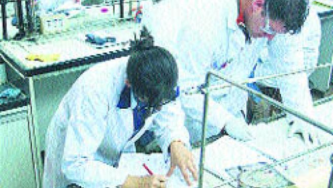 Los alumnos realizarán prácticas de laboratorio en sus proyectos.