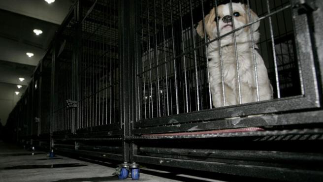 Un perro enjaulado espera a ser sacrificado (J.Lee/Reuters)