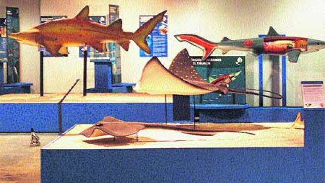 Derecha, máquinas para la elaboración de boinas; debajo, maquetas de tiburones; en vertical, escultura en la Galería Xanon.