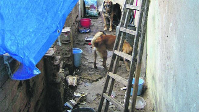 Galeria interior de la vivenda on s'acumulava brutícia i defecacions dels gossos. (Fundació FAADA)