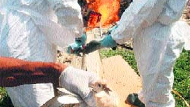 Las autoridades veterinarias y sanitarias indonesias han extremado los controles.(Efe)