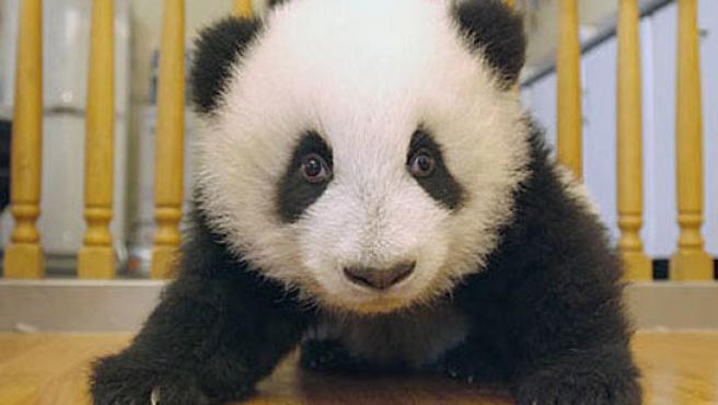 Éste es uno de los osos que necesita un nombre. (China Daily)