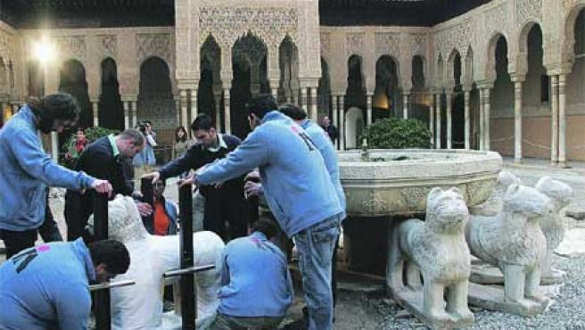 Los operarios colocan una estructura de metal alrededor del león para poder trasladarlo (Torres).