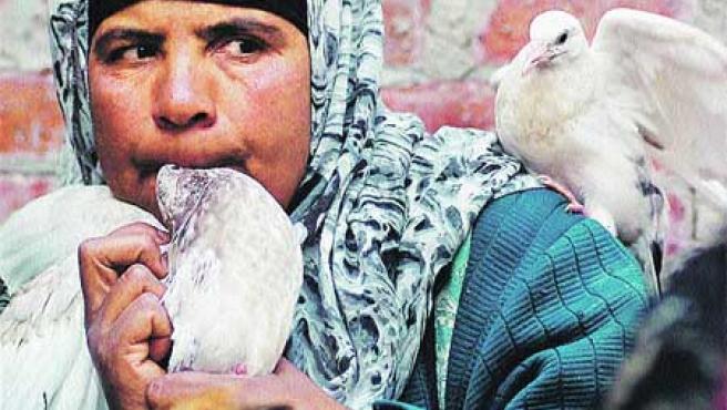 Gripe aviar. (Ap).