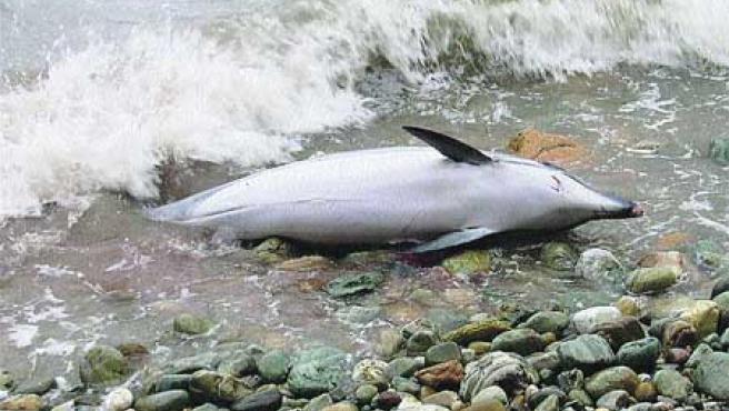 Cetáceos vararon en las costas asturianas. (Efe).