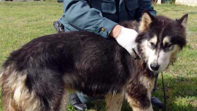 Los agentes observaron como el hombre daba golpes al perro que se encontraba tendido en el suelo (EFE)