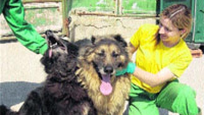 Casi 190 personas ya se acercaron al refugio coruñés para ver a los perros y 71 adoptaron. (Moncho Fuentes)