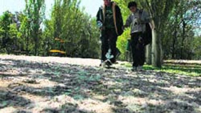 La pelusa de los árboles cubría ayer como un manto blanco el suelo del parque Lineal del Huerva.(F. Simón)