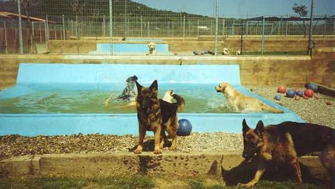 Los perros tienes piscina donde remojarse en este centro canino.