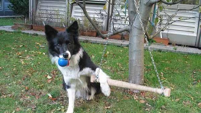 El perro amaestrado del experimento (FUENTE: NEW SCIENTIST).