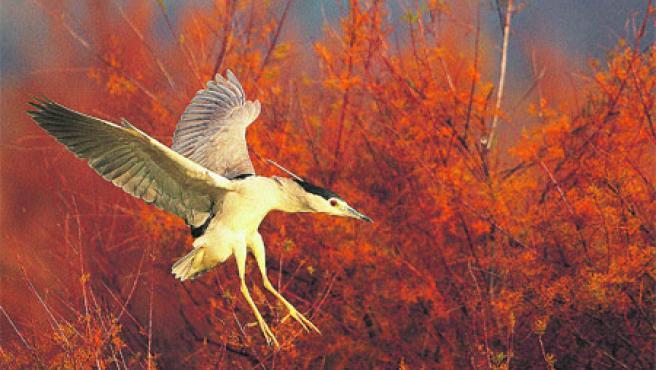 Martinete en vuelo es la foto ganadora.