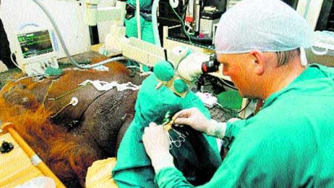 Médico sudafricano Izak Venter. (Efe).