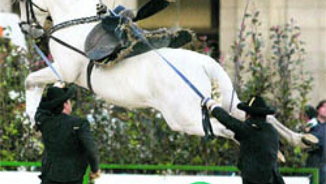 Uno de los caballos que participan en este espectáculo de acrobacias, música y galopes.