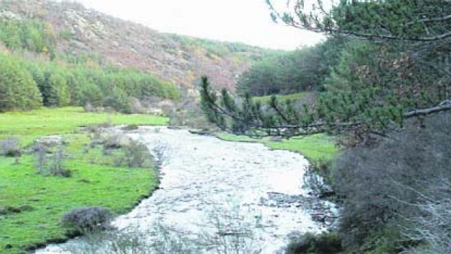 El río Lillas atraviesa el hayedo de Tejera Negra. (C. Gil)