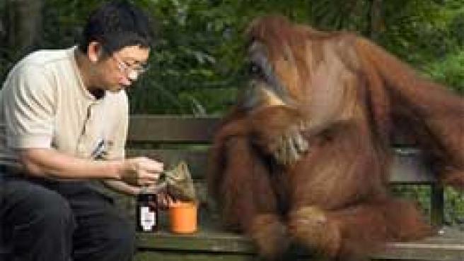 Técnicas chinas para sus animales (Fuente: Zoo de Singapur)