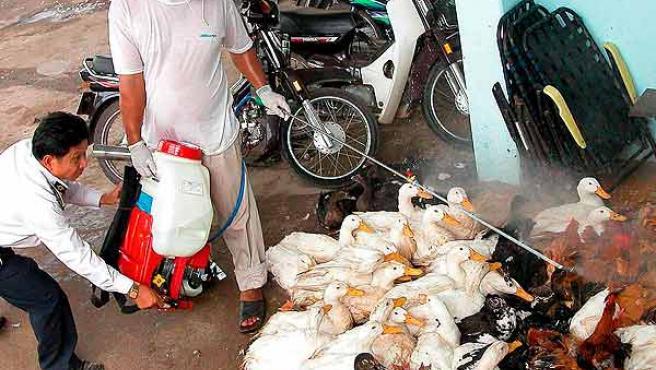 Veterinarios desinfectando una granja en Vietnam (EFE / STR).