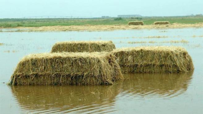 Los campos de Alcázar de San Juan, completamente anegados por el agua (Foto: Efe)