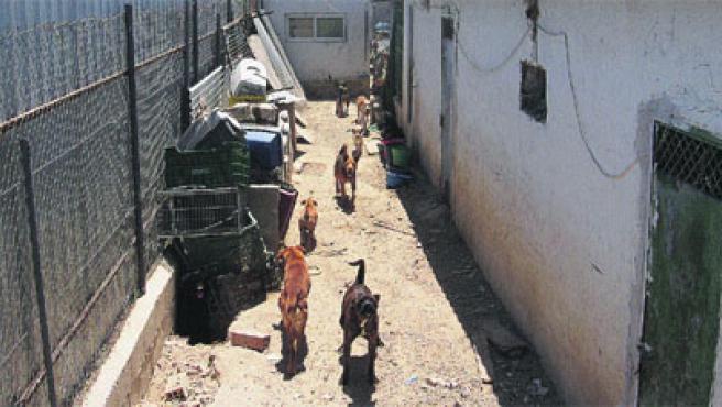 Sueltos entre jaulas viejas y basura viven los animales de la protectora de Sangonera la Verde (Murcia).