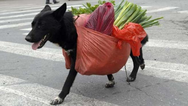 En la provincia china de Hubei, los perros son utilizados como animales de carga.