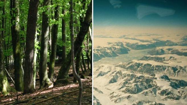 Groenlandia (d) pudo tener pinares antes de helarse. (WIKIPEDIA)