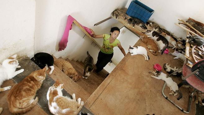 La promotora de la iniciativa vive rodeada de gatos (REUTERS/ ALI SONG)