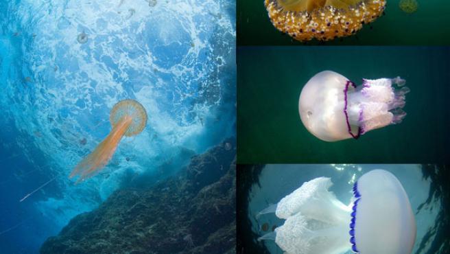 Estos animalitos de colores campan a sus anchas por los mares.