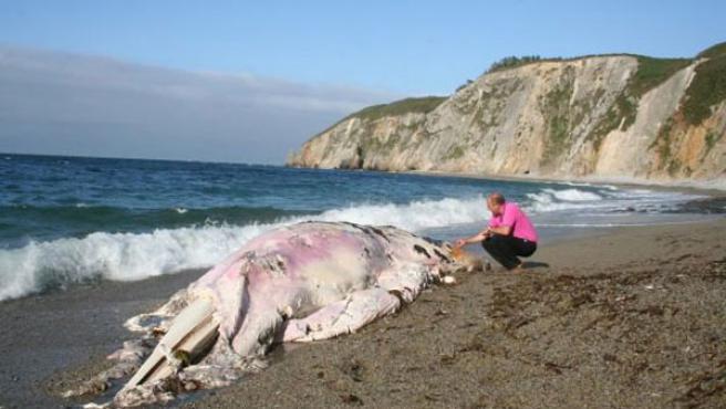 La ballena muerta en la playa.(Foto:EFE)