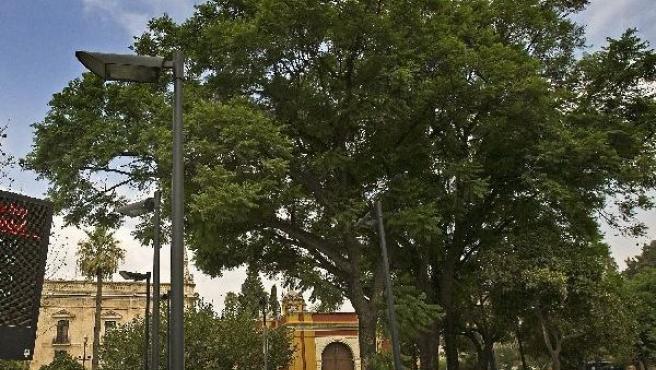 Varias jacarandas ubicadas junto a un panel de control de contaminación, en el centro de Sevilla.