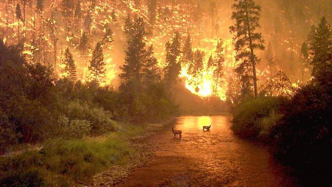 Un diez por ciento de los incendios forestales son provocados