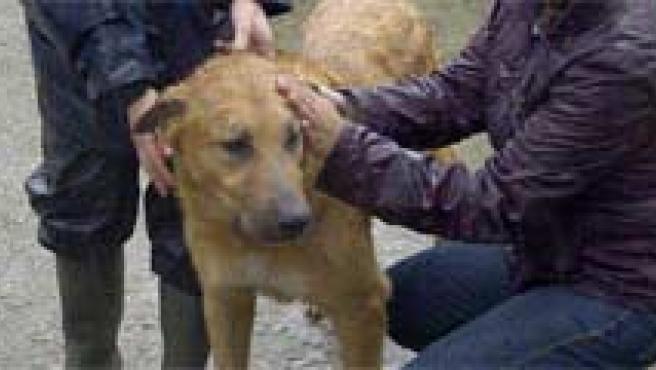 Afirman que hay numerosos perros abandonados en la provincia.