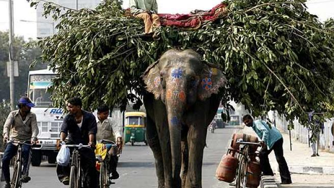 Tráfico pesado. Un elefante cargado camina por las calles de Nueva Delhi.