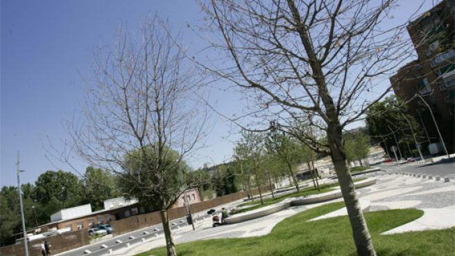 Los árboles de la avenida de Portugal, recién plantados tras el soterramiento de la calzada, también tienen síntomas de enfermedad.