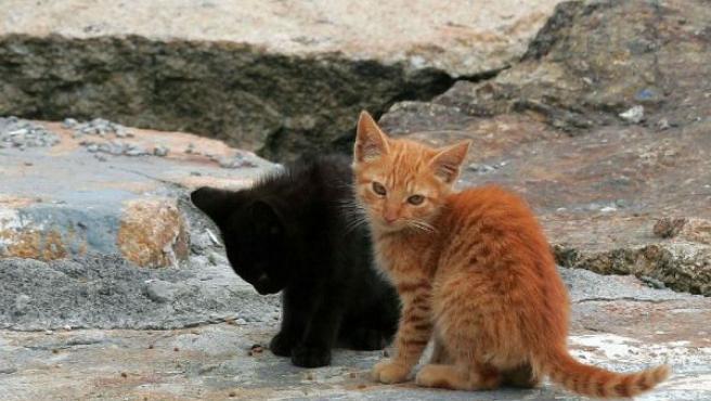 Gatos callejeros en las calles, en una imagen de archivo.