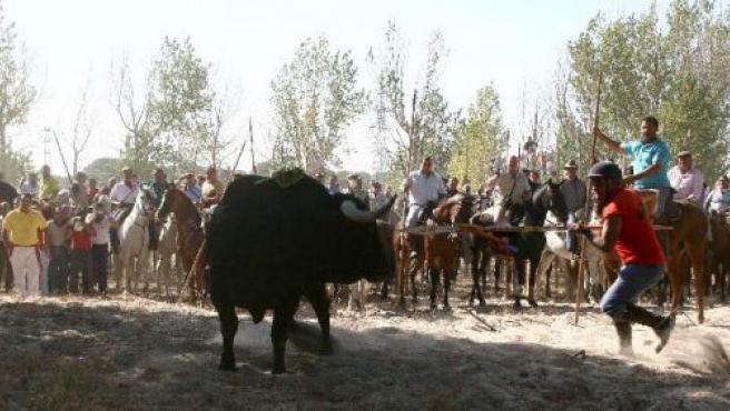 """""""El Cañero"""" en el momento de lancear al Toro de la Vega."""